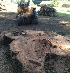 old tree stump needs to be removed